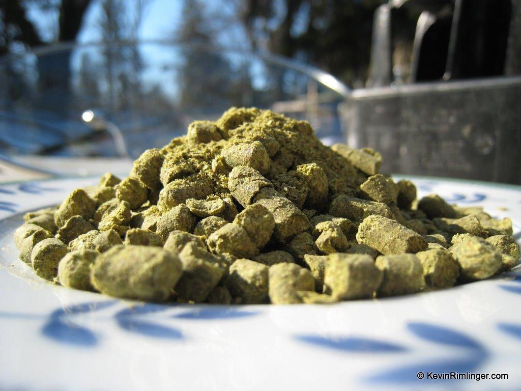 East Kent Goldings hop pellets ready for the boil