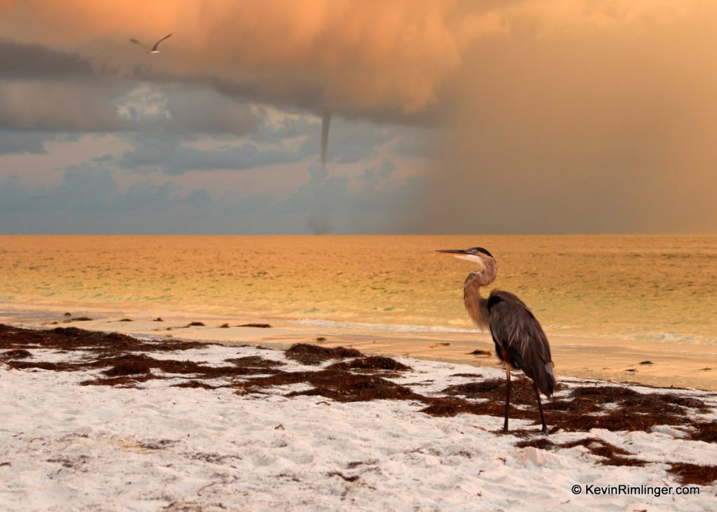 Great Blue Heron and waterspout over the Gulf of Mexico at sunrise near Anna Maria Island.
